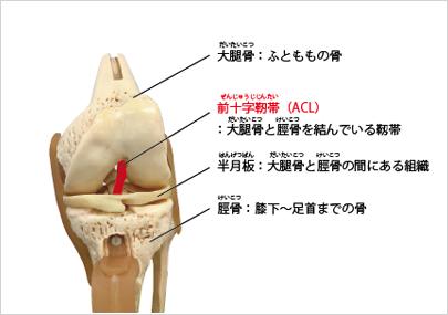 膝前十字靱帯損傷とは